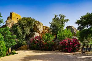 Фотографии Испания Сады Кусты Ограда Ель Lanjaron Castle gardens Природа