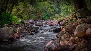 Фотография Камни Лес Гавайи Ручеек HDR Iao Valley West Maui Природа