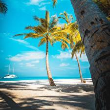 Картинки Тропический Море Пляжи Пальма Ствол дерева Природа
