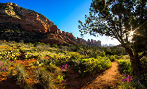 Фото Америка Деревья Кусты Лучи света Тропа Утес Arizona Природа