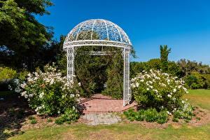 Фото Америка Сады Роза Калифорния Кустов South Coast Botanic Garden Природа