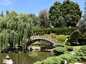 Обои США Парки Пруд Мосты Калифорния Лос-Анджелес Кустов Деревья Botanical Gardens San Marino Природа