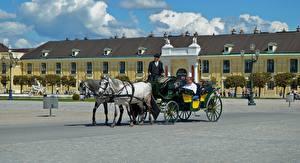 Фото Вена Австрия Лошади Городской площади Дворца Schönbrunn Города