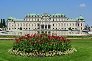 Фото Вена Австрия Парк Дворца Траве Belvedere город