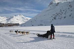 Обои Зимние Гора Собаки Снеге Сани Бег Тень животное