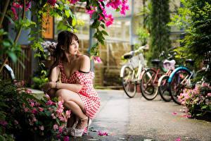 Картинки Азиатки Позирует Платья Боке Шатенки Сидящие девушка