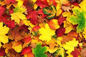 Фотографии Осенние Текстура Листья Клёна Природа