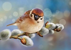 Картинки Птицы Воробей Вблизи Рисованные Ветки verba животное
