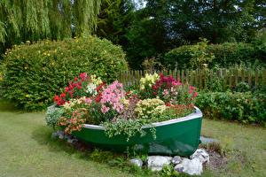 Фотографии Лодки Львиный зев Петунья цветок