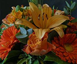 Картинки Букет Роза Гербера Лилия Оранжевый Цветы