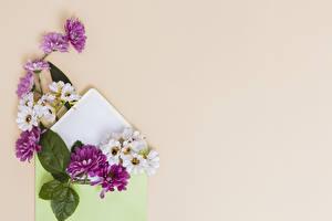 Обои Хризантемы Цветной фон Шаблон поздравительной открытки