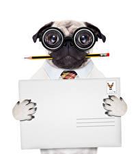 Фотография Оригинальные Собака Мопса Карандаш Очков Белом фоне Шаблон поздравительной открытки Забавные животное