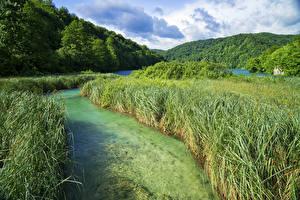 Фотографии Хорватия Парк Озеро Лес Траве Plitvice Lakes National Park Природа