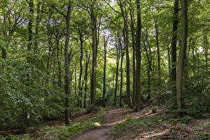 Фото Англия Лес Дерево Тропинка Bradenham