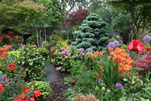 Картинки Англия Сады Рододендрон Мак Дизайн Кусты Walsall Garden Природа