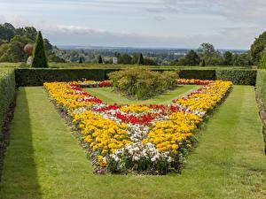 Фотография Англия Сады Бархатцы Газон Кустов Cliveden Garden Природа