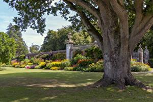 Фотография Англия Парк Ствол дерева Кусты Cliveden Garden Природа