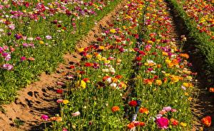 Картинка Поля Лютик Много Разноцветные Цветы