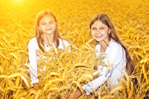 Картинка Поля Пшеница Девочка 2 Колосок Смотрит ребёнок