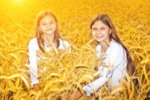 Картинка Поля Пшеница Девочки Две Колоски Взгляд ребёнок