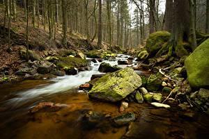 Обои Лес Германия Камень Дерева Ручей Природа