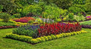 Фотография Сады Америка Дизайн Кусты Газоне Longwood Gardens Природа