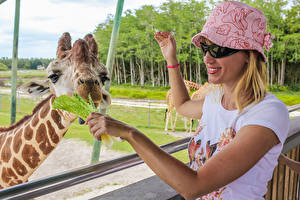 Обои Жирафы Блондинки Очках Улыбка Руки Шляпа Голова Девушки Животные