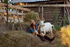 Картинки Коза козел Сидя Сено Сапог Шляпы Ног Evgenia Pyatnitskaya девушка Животные