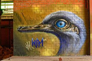 Фотография Граффити Птица Стена Кирпичный Голова