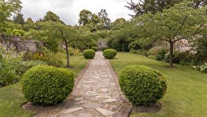 Обои Парки Великобритания Деревья Кусты Газон Greys Court Природа