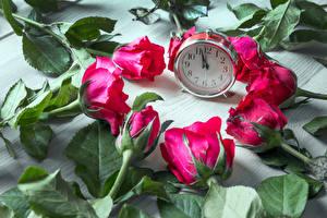 Фотографии Роза Часы Красный цветок