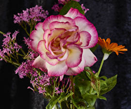 Картинка Роза Вблизи