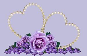 Картинки Розы День святого Валентина Жемчуг Цветной фон Сердца