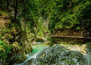 Обои Словения Речка Мосты Скале Каньона Кусты Vintgar Gorge Природа