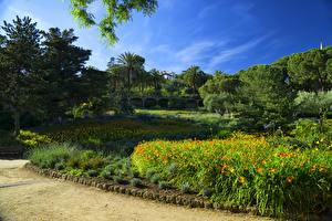 Фото Испания Парки Барселона Деревья Природа