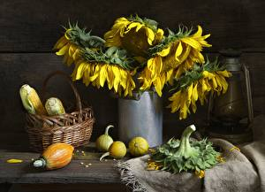 Фотографии Натюрморт Кукуруза Подсолнечник Корзины Цветы
