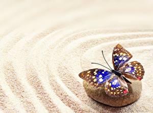Фото Камни Бабочки Песок zen