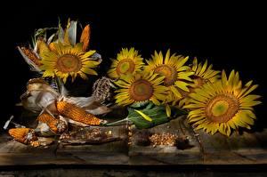 Картинки Подсолнечник Кукуруза Натюрморт Доски цветок