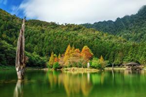 Обои Тайвань Озеро Лес Mingchi National Forest Recreation Area Природа