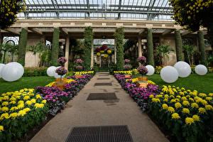Обои США Сады Хризантемы Дизайн Шар Longwood Gardens Природа
