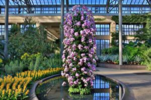 Фотография Штаты Сады Орхидеи Дизайн Longwood Gardens