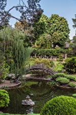Фотографии США Сады Пруд Мосты Калифорния Кусты Botanical Garden San Marino Природа