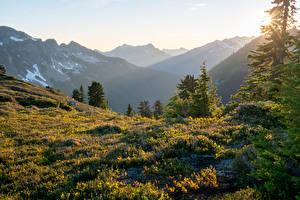 Фотографии США Горы Трава Ель Лучи света Glacier Peak Wilderness Природа