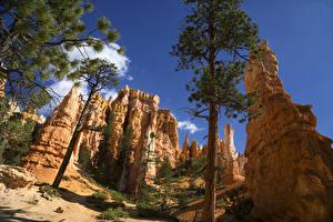 Картинки США Парки Скала Деревьев Ели Bryce Canyon National Park Природа