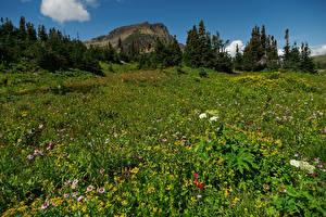 Фото Америка Парк Луга Утес Ель Glacier National Park Природа