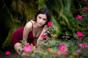 Фотография Азиатка Размытый фон Позирует Шатенка Взгляд Вырез на платье Девушки