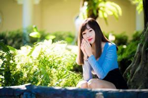 Картинки Азиатки Боке Сидящие Рука Позирует Шатенки девушка