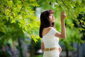 Фото Азиатка На ветке Размытый фон Листья Шатенка молодые женщины