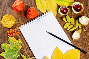 Обои Осень Ягоды Каштан Блокнот Карандаши Листья Physalis Природа картинки