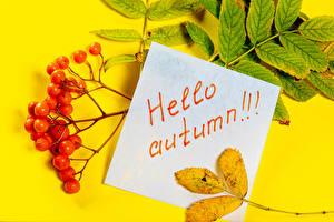 Картинки Осенние Ягоды Рябина Цветной фон Английский Листья Ветка Природа